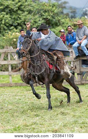June 3 2017 Machachi Ecuador: cowboy in field dressed traditionally handling lasso on horseback