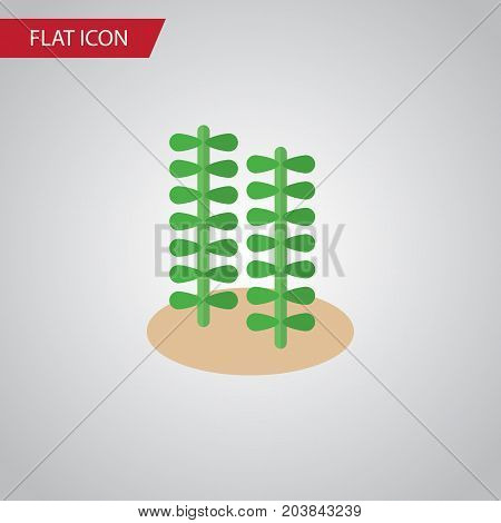 Seaweed Vector Element Can Be Used For Seaweed, Alga, Spirulina Design Concept.  Isolated Alga Flat Icon.
