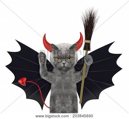 cute halloween cat in bat devil costume with broom - isolated on white background