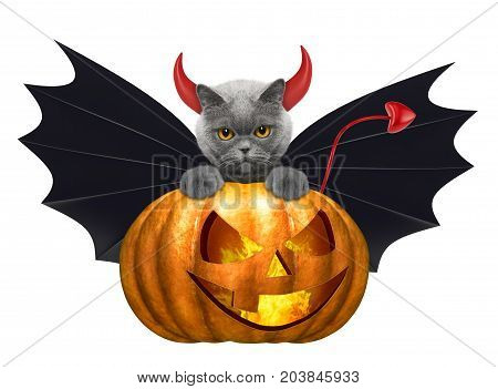 halloween pumpkin with cute cat in bat costume - isolated on white background