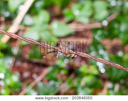 An Old And Brown Rusty Metal Barbed Wire