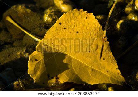 Fallen yellow leaf in a water stream at autumn, Topcider park, Belgrade Serbia