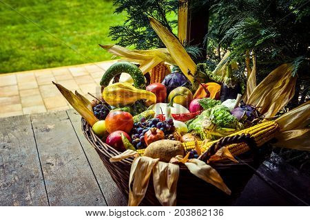 Organic Food Background. Autumn Concept