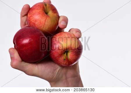 Male Hand Holds Red Apples, Copy Space. Apples On White