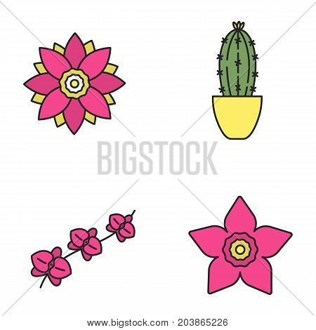 Flowers color icons set. Lotus, daffodil, orchid branch, cactus in flowerpot. Isolated vector illustrations