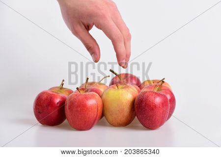 Apples In Bright And Juicy Red Colors. Hand Reaches Fruit