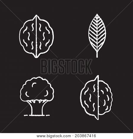 Forestry chalk icons set. Walnut leaf, oak tree, nuts. Isolated vector chalkboard illustrations