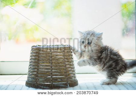 Happy Kitten Playing In Home.
