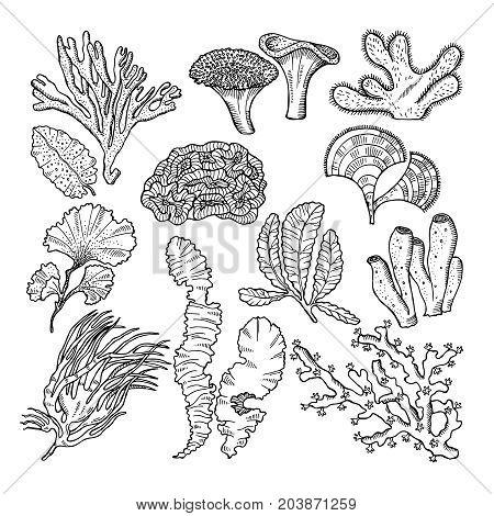 Corals and underwater plants in ocean or aquarium. Vector hand drawn pictures. illustration of underwater plants seaweed algae