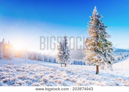 Mysterious winter landscape majestic mountains in winter. Magical winter snow covered tree. Winter road in the mountains. In anticipation of the holiday. Dramatic wintry scene. Carpathian. Ukraine