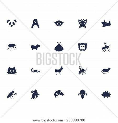 Collection Of Butterfly, Arachnid, Mouse And Other Elements.  Set Of 20 Zoology Icons Set.