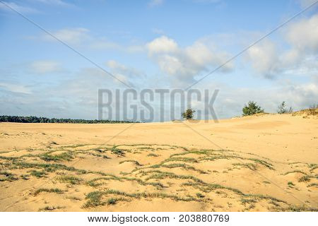 Sand-drift in a Dutch national park on a sunny day in the summer season.