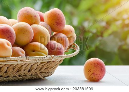 Wicker Basket Of Apricot Lies On A White Wooden Table On A Background Of Green Branches, Daylight