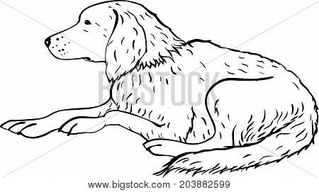 Stylized labrador or setter dog art line design. Artistic animal silhouette. Symbol 2018 year