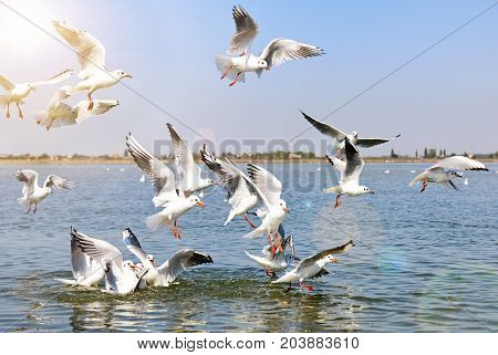 a flock of sea gulls flying over the sea surface in the rays of a bright sun a summer day
