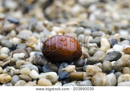 Close-up photo of brown chestnut with drops of rain lying on stones in autumn rainy day