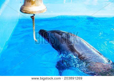 Beautiful Dolphin Swims In The Pool In Blue Water.