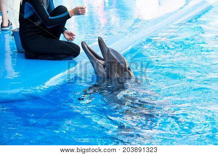 Odessa, Ukraine - September 02, 2017: Dolphins On Creative Entertaining Show At Dolphinarium With Fu