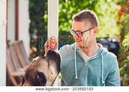 Huge dog begging for a biscuit. Young man playing with cane corso dog in the garden.