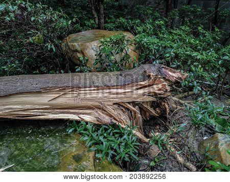 broken trees fter a strong storm went through