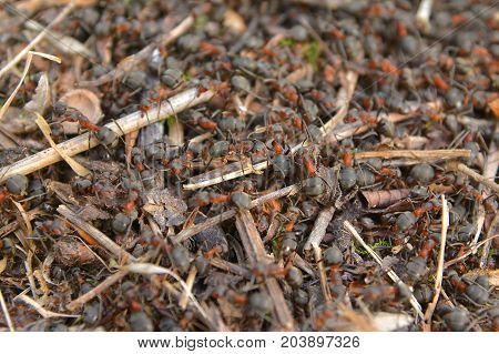 closeup of a family of ant colony