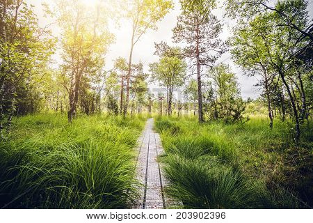 Wooden Trail In A Swamp Area With Tall Green Grass