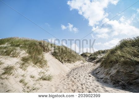 Dune On A Beach With Lyme Grass