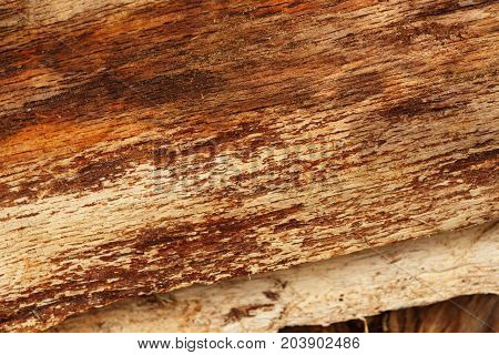 Wooden surface of firewood close up. Old dry wood texture, tree background