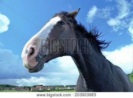 Close Up Of A Brown Horse With A White Face