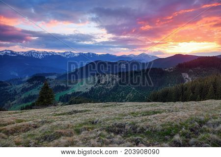 Beautiful pink sunset shine enlightens the picturesque landscapes with fair trees and high mountains covered with snow.