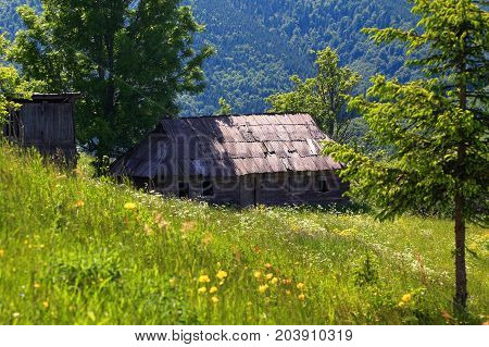 Among the forests and mountains on the lawn there is an old abandoned wooden hut. Green trees sun rays nice summer day.