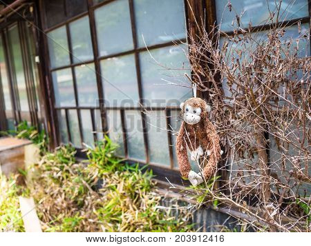 KYOTO, JAPAN - JULY 05, 2017: Teddy monkey hanging from a branch in the garden of a house in Kyoto, Japan.