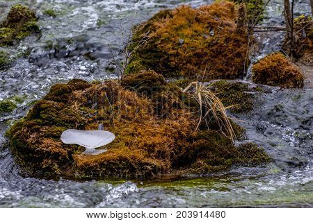Moss in the water. The frozen ice on the moss in the middle of the stream