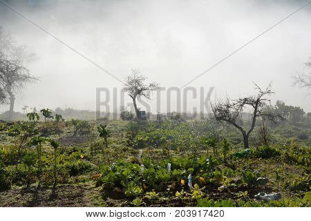 agriculture; garden; plantations; vegetables; foggy; in; the; morning
