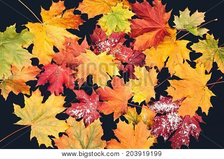 autumn foliage in different colors on dark background