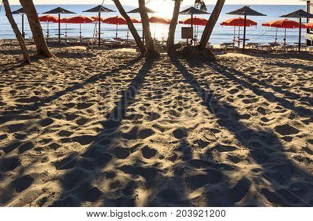 Summertime:the most beautiful sandy beaches of Apulia (Italy).Salento coast: shoreline backlit  with trees and umbrellas.The sand coastline is characterized by dunes covered with Mediterranean maquis.