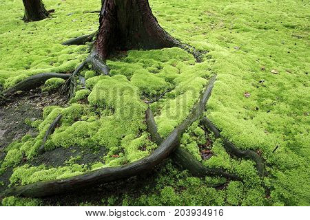Exuberant moss in the garden of Toshodaiji template
