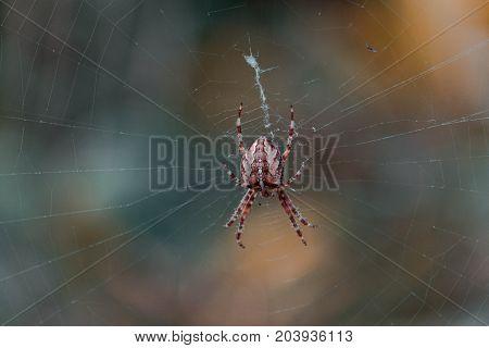 Spinnennetz wild raubtier spinne angst  wild lebende tiere
