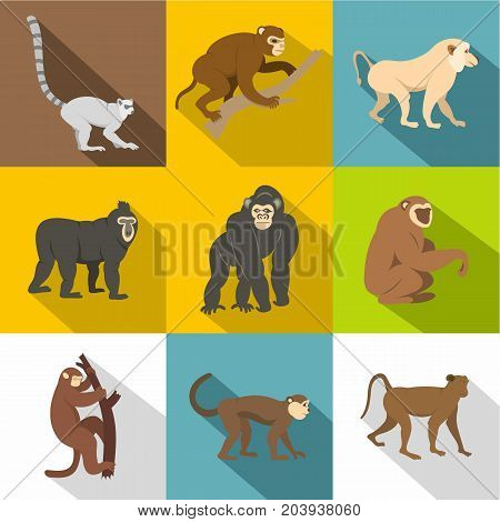 Tropical monkey icon set. Flat style set of 9 tropical monkey vector icons for web design
