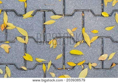 Yellow Fallen Autumn Leaves on the on the Sidewalk Paved with Gray Concrete Paving Stones Top View. Autumn Approach Season Change Concept