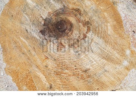 rough cross section of log as nature background