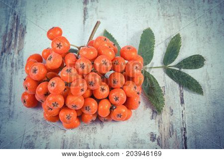 Vintage Photo, Bunch Of Red Rowan With Leaves On Rustic Board