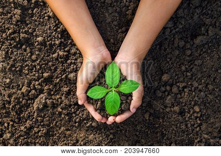 hand holding young plant for planting in soil concept green world