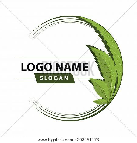medical marijuana cannabis green leaf logo. vector illustration.