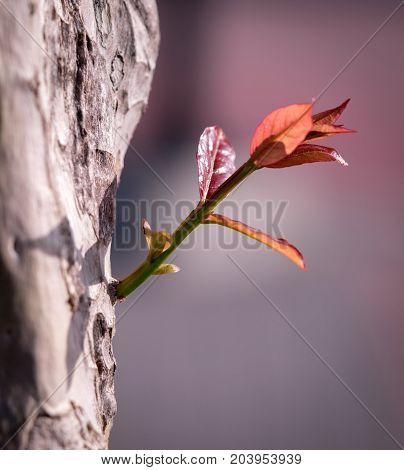 Red branches growth from tree trunk. New expanding branches and development business for growing in a future concept