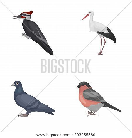 Woodpecker, stork and others. Birds set collection icons in cartoon style vector symbol stock illustration .
