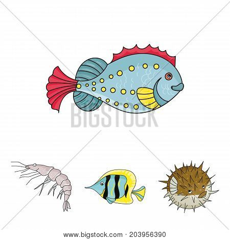 Shrimp, fish, hedgehog and other species.Sea animals set collection icons in cartoon style vector symbol stock illustration .