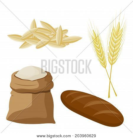 Wheat, barley, oat and Rye products. vector