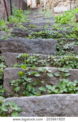 A series of overgrown stone steps leading up in Riomaggiore Italy