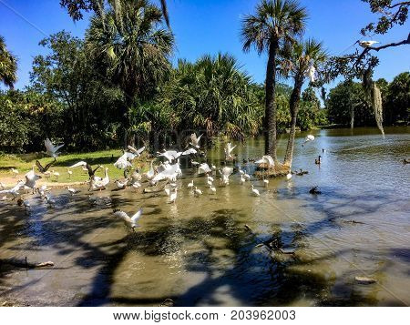 Birds Migrating To Pond In Louisiana Park